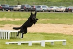 Free public K-9 demonstration on June 25 in Hermantown